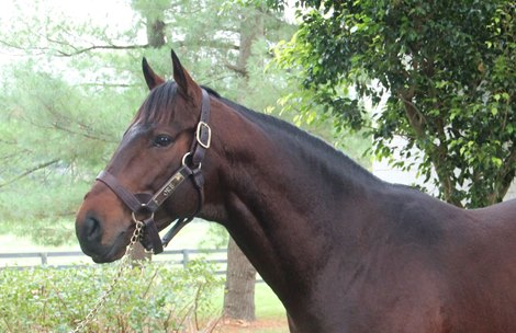 Orb Combines Quality And Value Bloodhorse