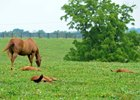 Reports of Mares Bred are due by Aug. 1