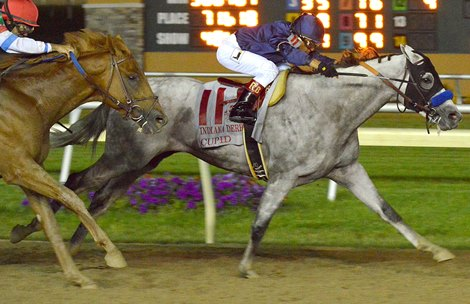 Cupid Guts Out Victory In Indiana Derby Bloodhorse