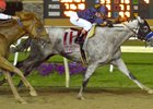 Cupid defeats The Player in Indiana Derby