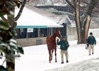 Keeneland January Sale Begins Jan. 9