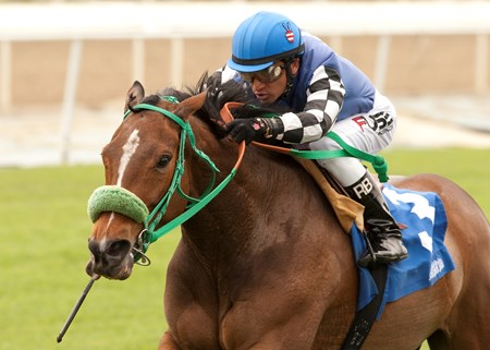 Steve Moger's Stormy Lucy and jockey Rafael Bejarano win the Grade II $150,000 Santa Barbara Handicap Sunday, April 13, 2014 at Santa Anita Park, Arcadia, CA.