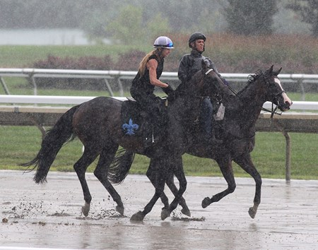 Exaggerator (L) with exercise rider Lisa Dickey gallops in the driving rain on Friday morning July 29, 2016 at Monmouth Park.