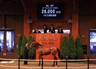 Record Gross, Average at JRHA Yearling Sale