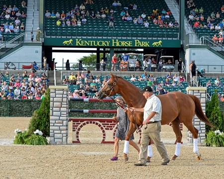 The inaugural Rood & Riddle Comeback Award was presented to two-time Horse of the Year Wise Dan during Hats Off Day at the Kentucky Horse Park in Lexington, Ky.