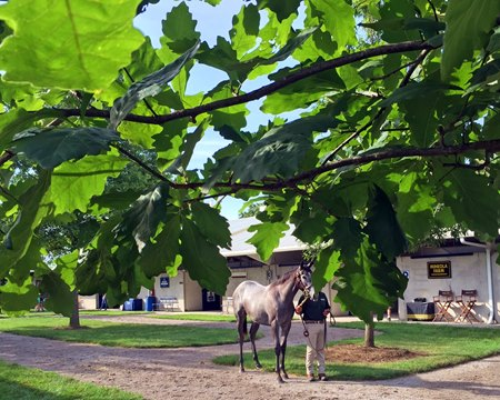 Fasig-Tipton July Yearling Sale