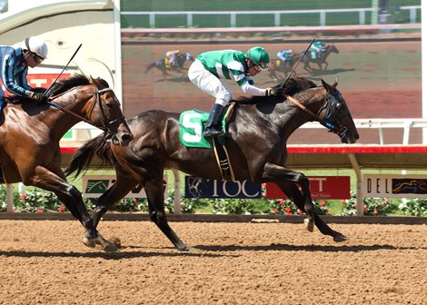 Hard Aces Too Tough In Cougar Ii Bloodhorse