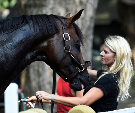 Julie Clark, assistant to trainer Keith Desormeaux holds a very sharp Preakness winner Exaggerator after his work at this morning the Saratoga Race Course Friday July 23 2016 in Saratoga Springs, N.Y.