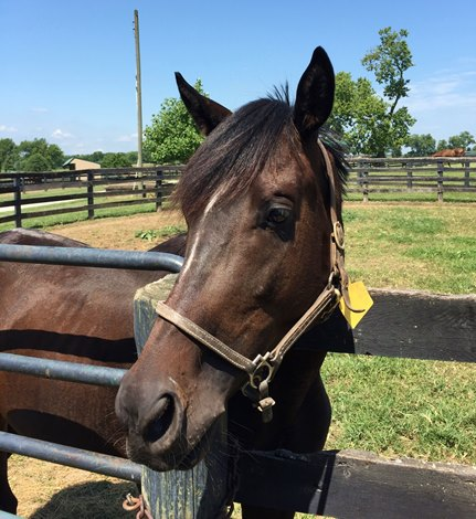 Ky Busy Finding Homes For Abandoned Horses Bloodhorse