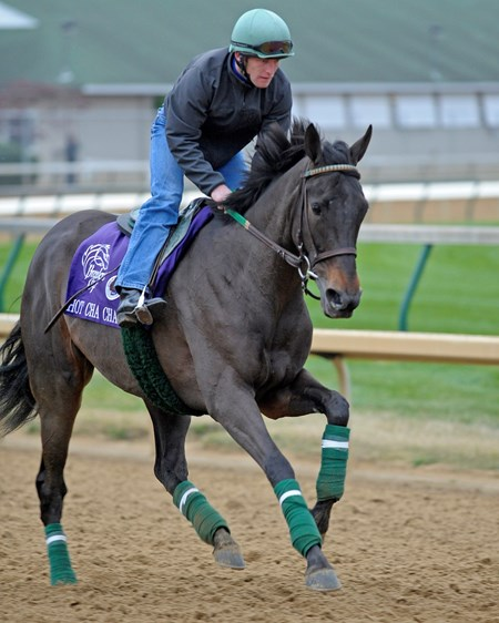 Hot Cha Cha Breeders' Cup horses work at Churchill Downs on Nov.3, 2010, in Lexington, KY.