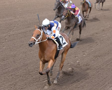 Fridaynitestar wins the 2016 MTA Sales Graduate Futurity