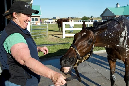 July 2, 2016 Queen's Plate contender Gamble's Ghost, plays with assit trainer Laurie Allen