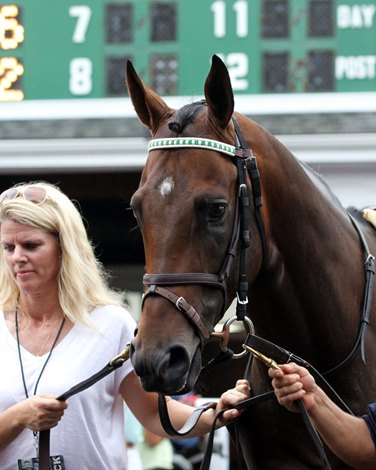 Full Travers Field Awaits Exaggerator Bloodhorse