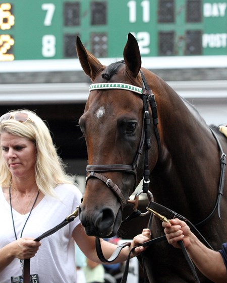 Exaggerator in the paddock prior to winning the 49th Running of the Haskell Invitational at Monmouth Park on July 31, 2016.
