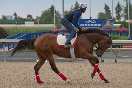 July 1, 2016 Queen's Plate contender Leavem in Malibu.gallops under exercise rider Wayne Brown.