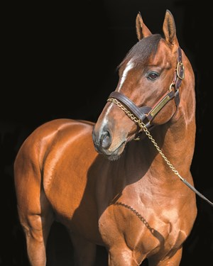 Mucho Macho Man at Adena Springs in Paris, Kentucky on December 7, 2014.