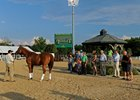 Wise Dan at Kentucky Horse Park