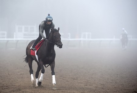 Champion Turf Filly Tepin goes out in thick fog for exercise this morning Sunday July 24 2016