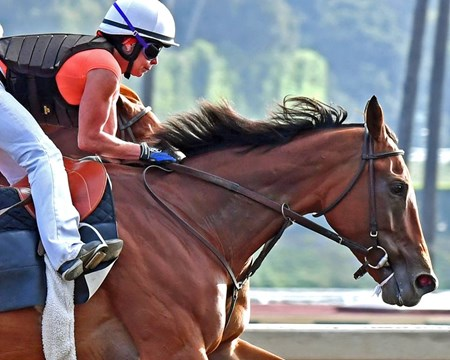 Beholder works at Santa Anita July 3, 2016
