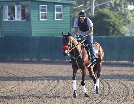 Nyquist with exercise rider Jonny Garcia jogs alone on the track at Monmouth Park in Oceanport, New Jersey on Thursday morning July 28, 2016.