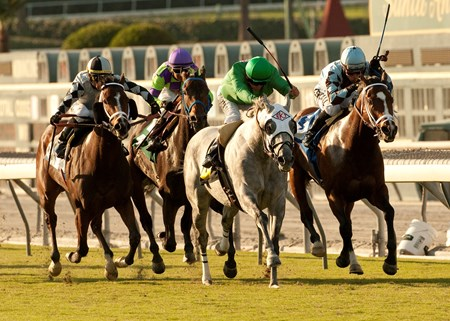 Hi Card Ranch's California Flag and jockey Patrick Valenzuela, second from right, outrun Excessive Passion (Joel Rosario), right, Ain't No Other (Garrett Gomez), left, and Leroy's Dynameaux (Rafael Bejarano), second from left, to win the Grade III, $100,000 Morvich Stakes, Monday, October 10, 2011 at Santa Anita Park, Arcadia CA.