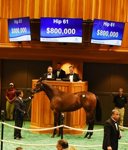 Hip 61 sold for $800,000