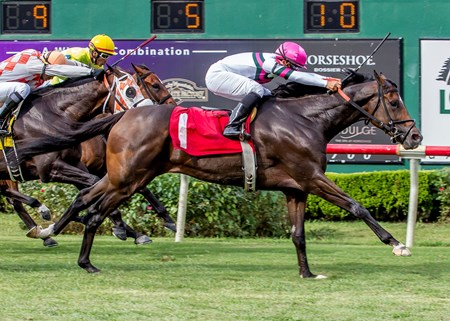 Sunbean wins the 2016 Louisiana Cup Turf Classic