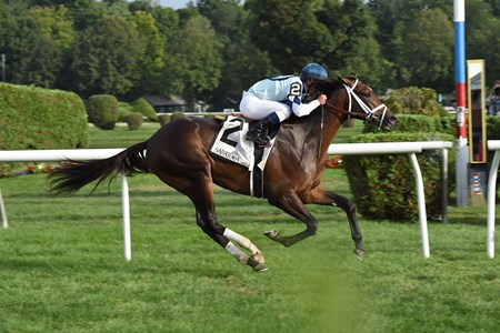 Made You Look wins the With Anticipation Stakes at Saratoga Aug. 31.