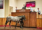 Dark Angel colt topped the 2016 Goffs Premier yearling sale