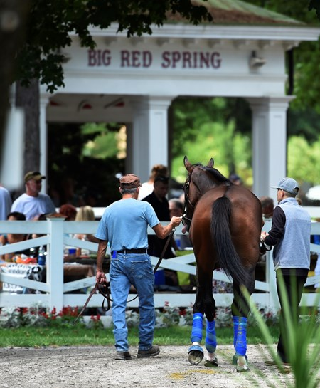Songbird is schooled in the paddock at the Saratoga Race Course Thursday Aug. 18, 2016.