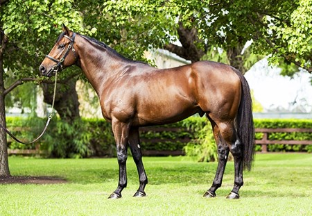 Pride of Dubai at Coolmore Australia