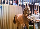 A filly by Galileo, Hip 97, topped the second day of the Arqana August Yearling sale, Part I, selling for €1.4 million