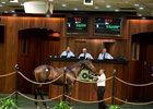 OBS yearling sale