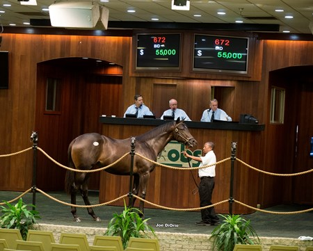 2016 OBS August Yearling Sale Hip 672 Archarcharch-Sweet Screamer sold for $55,000