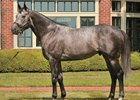 The Factor will stand at Shizunai Stallion Complex in 2018