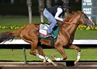 California Chrome working Aug. 14