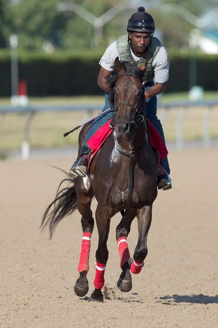 Conquest Daddyo gallops under exercise rider Carey Brooks at Woodbine on August 18, 2016