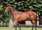 Session-topping Acclamation filly