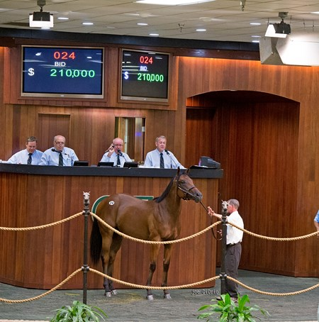 Hip 24 Flatter- Madoffwiththecash sold $210.000 @ OBS in Ocala Fl Aug 23 2016