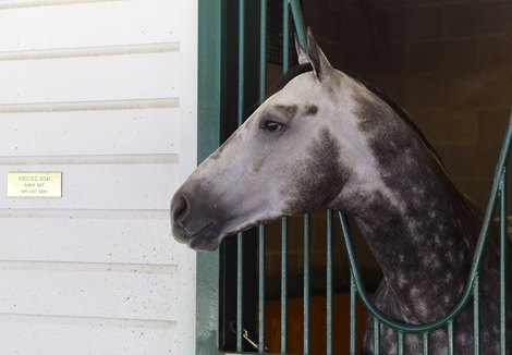 Frosted Confirmed For Breeders Cup Classic Bloodhorse