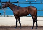 Barretts Select Yearling Sale Stays Even