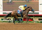 Vale Dori will be one of the favorites in the Bayakoa Handicap at Del Mar