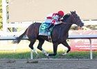 Songbird Untouchable in Cotillion