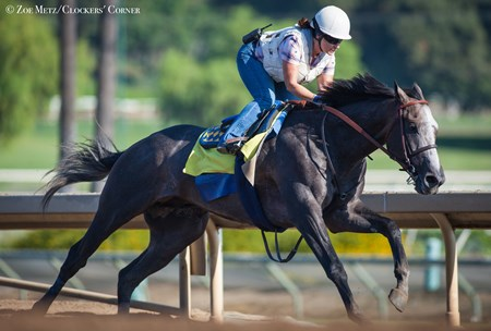 Arrogate - Santa Anita, September 17, 2016
