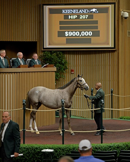 Hip 207 colt by Tapit from Believe You Can from Brereton C. Jones/Airdrie brings $900,000 Yearlings at Keeneland on Sept. 13, 2016, in Lexington, Ky.