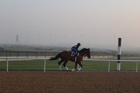 Keen Ice at Meydan Racecourse in Dubai, 2016