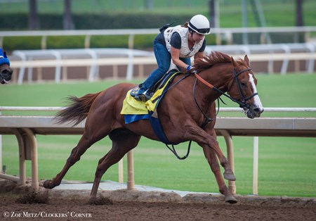 Lord Nelson works 5 furlongs in 1:00.60 on Sept. 12, 2016