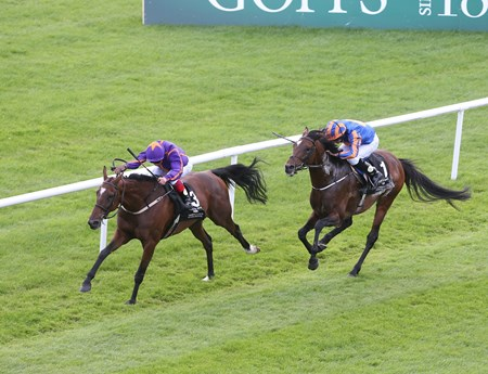 Wicklow Brave wins the Palmerstown House Estate Irish St Leger (Ire-I), defeating Order of St George Sept. 11, 2016.