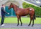 Dandy Man Filly Stars at Tattersalls Ireland