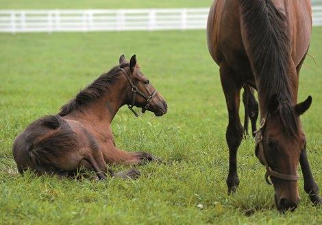 foaling report